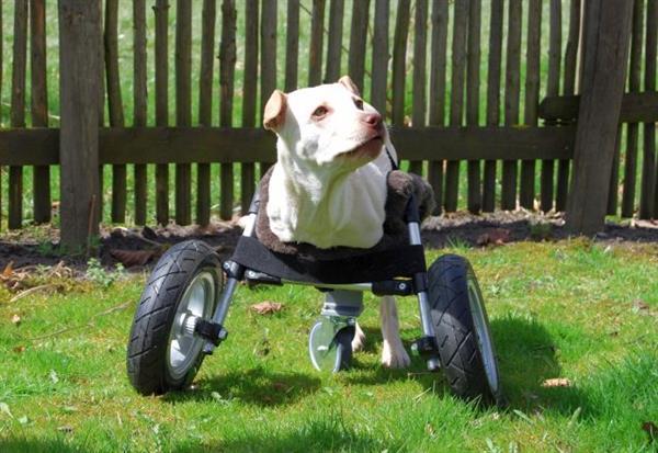 Luisa in 3D printed wheelchair