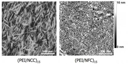 nanocellulose crystalline fibril