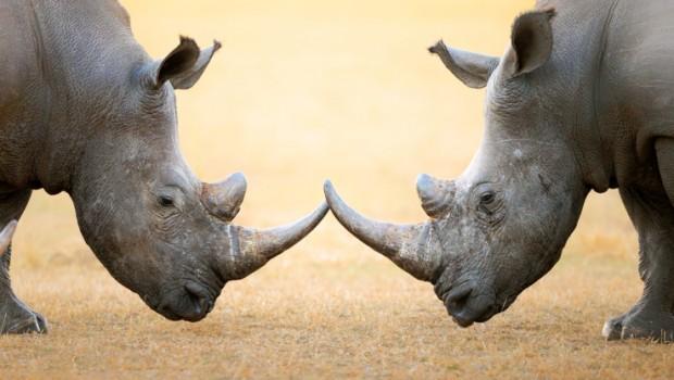 3D Printing Technology Saves Animal Kingdom