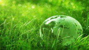 green-globe-grass